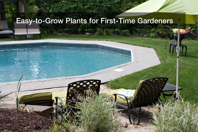 Easy-to-Grow Plants for First-Time Gardeners