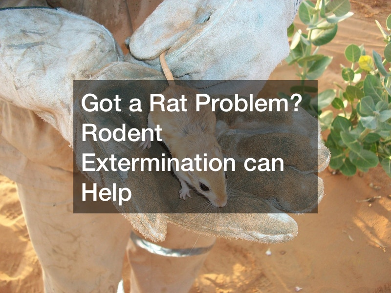 Got a Rat Problem? Rodent Extermination can Help